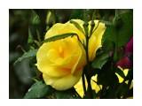 Название: DSC07431_н Фотоальбом: Розы в сквере музея Категория: Цветы  Время съемки/редактирования: 2016:07:29 14:14:20 Фотокамера: SONY - DSC-HX300 Диафрагма: f/6.3 Выдержка: 1/250 Фокусное расстояние: 21500/100    Просмотров: 47 Комментариев: 0