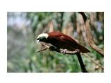 Название: Большая райская птица Фотоальбом: Остров богов Бали Категория: Туризм, путешествия  Время съемки/редактирования: 2020:09:20 10:38:36 Фотокамера: Canon - Canon EOS 400D DIGITAL Диафрагма: f/4.5 Выдержка: 1/400 Фокусное расстояние: 133/1    Просмотров: 88 Комментариев: 0