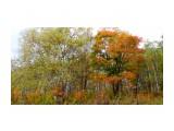 Название: DSC07777 Фотоальбом: Осень. Категория: Природа  Время съемки/редактирования: 2020:10:07 16:43:08 Фотокамера: SONY - DSC-TX30 Диафрагма: f/3.5 Выдержка: 1/60 Фокусное расстояние: 470/100    Просмотров: 226 Комментариев: 0