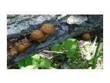 Первые древесные грибы  Просмотров: 832 Комментариев: 0