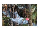 Прогулки по Комиссаровке Фотограф: фотохроник  Просмотров: 381 Комментариев: 0
