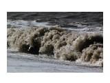 Название: Вечный двигатель Фотоальбом: 2013 09 У моря... Чайки... Категория: Природа Фотограф: vikirin  Время съемки/редактирования: 2013:09:02 12:48:02 Фотокамера: Canon - Canon EOS Kiss X3 Диафрагма: f/16.0 Выдержка: 1/2000 Фокусное расстояние: 250/1    Просмотров: 1418 Комментариев: 0