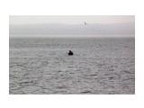 Кто то бродит в воде... Фотограф: vikirin  Просмотров: 1395 Комментариев: 0