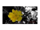 Лютики-цветочки...  Просмотров: 57 Комментариев: 0