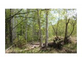 В березовом лесу Фотограф: vikirin  Просмотров: 2203 Комментариев: 0