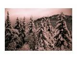 Зимний лес  Просмотров: 1829 Комментариев: 0