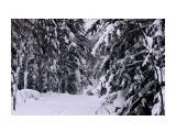 Зима на перевале.. Фотограф: vikirin  Просмотров: 1305 Комментариев: 2