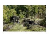 """"""" И на камнях растут деревья"""" Фотограф: Mikhaylovich  Просмотров: 2159 Комментариев: 0"""