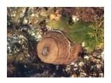 Название: CC3EA8CF-FE2F-4AEB-8B30-737A05F39632 Фотоальбом: Мыс Менапуцы, озеро Лебяжье и Баргузинское Категория: Туризм, путешествия Фотограф: Tsygankov Yuriy  Просмотров: 965 Комментариев: 0