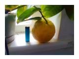Фото2778 - копия плод.высота зажигалки 8 сантиметров  Просмотров: 246 Комментариев: 3