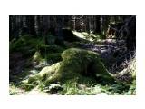 DSC03885 Фотограф: vikirin  Просмотров: 262 Комментариев: 0