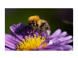 PICT4479 Фотограф: VictorV  Просмотров: 1857 Комментариев: 1
