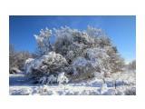 Зима Фотограф: gadzila  Просмотров: 653 Комментариев: 0
