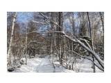 Название: IMG_4373 Фотоальбом: Зимний лес Категория: Природа Фотограф: Region_65  Время съемки/редактирования: 2012:12:01 17:15:14 Фотокамера: Canon - Canon EOS 50D Диафрагма: f/8.0 Выдержка: 1/160 Фокусное расстояние: 24/1    Просмотров: 1062 Комментариев: 0