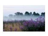 Название: 2016 08 09 туман на полях в Белом.... Фотоальбом: ЛЕТО... Категория: Пейзаж Фотограф: vikirin  Время съемки/редактирования: 2016:08:10 13:55:22 Фотокамера: SONY - NEX-5T Диафрагма: f/5.6 Выдержка: 1/80 Фокусное расстояние: 500/10    Просмотров: 1250 Комментариев: 0