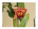 Название: Изображение 005 Фотоальбом: мои цветы Категория: Цветы  Время съемки/редактирования: 2010:09:14 00:29:27 Фотокамера: OLYMPUS IMAGING CORP.   - uD600,S600       Диафрагма: f/5.2 Выдержка: 1/100 Фокусное расстояние: 1740/100 Светочуствительность: 100   Просмотров: 486 Комментариев: 2