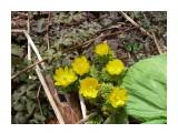 Цветок для беспокойного человека! Фотограф: viktorb Цветок Адониса, в Уюновской долине! Окр. Южно-Сахалинска!  Просмотров: 1309 Комментариев: 0