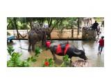 буйвол и слон  Просмотров: 17 Комментариев: