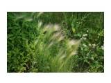 Владивосток Фотограф: vikirin  Просмотров: 416 Комментариев: 0