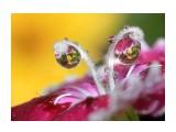Название: ..... Фотоальбом: Цветы. Удивительное всегда рядом Категория: Макросъёмка  Просмотров: 187 Комментариев: 0