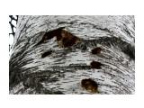 Голодный дятел страшнее катюши... Фотограф: vikirin  Просмотров: 1795 Комментариев: 0