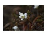 Первые весенние... Фотограф: vikirin  Просмотров: 1740 Комментариев: 0