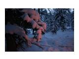 Свет от костра на снежных лапах елки.. Фотограф: vikirin  Просмотров: 3183 Комментариев: 0