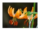 Название: DSC07084_н Фотоальбом: Цветы Категория: Цветы  Время съемки/редактирования: 2016:07:11 13:36:53 Фотокамера: SONY - DSC-HX300 Диафрагма: f/6.3 Выдержка: 1/250 Фокусное расстояние: 21500/100    Просмотров: 71 Комментариев: 2