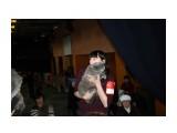 Название: IMG_5000 Фотоальбом: выставка кошек 29.11.2009 Категория: Животные  Время съемки/редактирования: 2009:11:29 16:43:18 Фотокамера: Canon - Canon EOS 1000D Диафрагма: f/4.0 Выдержка: 1/60 Фокусное расстояние: 30/1 Светочуствительность: 400   Просмотров: 386 Комментариев: 0