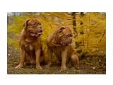 Название: _MG_2948_ Фотоальбом: Мои собаки Категория: Животные Фотограф: Светличная Наталья  Просмотров: 1049 Комментариев: 2
