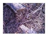 Дерево, сваленное бобрами  Просмотров: 465 Комментариев: