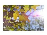 Осень  DSC_0165   Просмотров: 99  Комментариев: 0