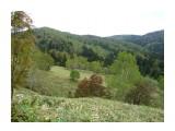 Бамбуковые поля, на Яблоневом перевале! Фотограф: viktorb о. Сахалин!  Просмотров: 938 Комментариев: 0