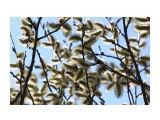 В цвету... Фотограф: vikirin  Просмотров: 1831 Комментариев: 0
