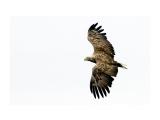 охотник Фотограф: ©  marka /печать больших фотографий,создание слайд-шоу на DVD/  Просмотров: 592 Комментариев: 0