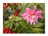 Название: P9084040 Фотоальбом: Цветы Категория: Цветы  Время съемки/редактирования: 2013:09:08 11:08:28 Фотокамера: OLYMPUS IMAGING CORP.   - T105,T100,X36 Диафрагма: f/3.1 Выдержка: 1/250 Фокусное расстояние: 630/100    Просмотров: 1169 Комментариев: 0