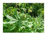 Береговые цветы.. Фотограф: vikirin  Просмотров: 3932 Комментариев: 0