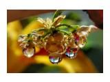 Название: . Фотоальбом: Цветы. Удивительное всегда рядом Категория: Макросъёмка  Просмотров: 189 Комментариев: 0