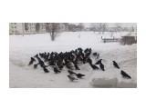 Однажды морозным утром Фотограф: vikirin  Просмотров: 1141 Комментариев: 2