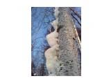 Снежная гусенница Фотограф: vikirin  Просмотров: 3159 Комментариев: 0