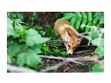 Название: IMG_3515 Фотоальбом: Зверье Категория: Животные  Время съемки/редактирования: 2012:07:19 01:07:07 Фотокамера: Canon - Canon EOS 5D Mark II Диафрагма: f/4.5 Выдержка: 1/40 Фокусное расстояние: 50/1    Просмотров: 486 Комментариев: 0