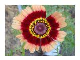 Название: Фото 1 Фотоальбом: Сахалинские цветы Категория: Цветы  Время съемки/редактирования: 2009:08:09 17:02:43 Фотокамера: SONY - DSC-T70 Диафрагма: f/3.5 Выдержка: 10/500 Фокусное расстояние: 688/100 Светочуствительность: 100   Просмотров: 698 Комментариев: 0