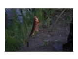 Случайная рыбалка, закинули - каак давай клевать. Фотограф: vikirin  Просмотров: 904 Комментариев: 0