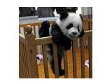 Название: Побег :))) Фотоальбом: Живности Категория: Животные  Просмотров: 82 Комментариев: 0