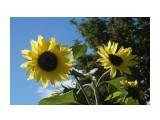 DSC04038 Фотограф: vikirin  Просмотров: 504 Комментариев: 0