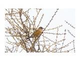 Название: _DSC8798 Фотоальбом: Птички Категория: Животные Фотограф: VictorV  Время съемки/редактирования: 2021:05:15 21:18:59 Фотокамера: SONY - ILCA-77M2 Диафрагма: f/7.1 Выдержка: 1/500 Фокусное расстояние: 6000/10    Просмотров: 2 Комментариев: 0
