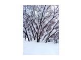 В снегу.. Фотограф: vikirin  Просмотров: 2437 Комментариев: 0