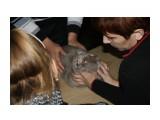 Название: Зевс Фотоальбом: выставка кошек 29.11.2009 Категория: Животные  Время съемки/редактирования: 2009:11:29 16:53:34 Фотокамера: Canon - Canon EOS 1000D Диафрагма: f/5.6 Выдержка: 1/60 Фокусное расстояние: 55/1 Светочуствительность: 400   Просмотров: 497 Комментариев: 0