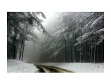 Зимний туман  Просмотров: 1360 Комментариев: