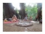 DSCN0817 Индия. Гоа. Пляж Арамболь. У баньяна с мудрым бАбой.  Просмотров: 8 Комментариев: